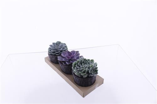 <h4>Echeveria mix</h4>