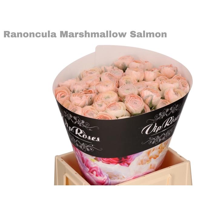 <h4>RAN OV MARSHMALLOW SALMON</h4>