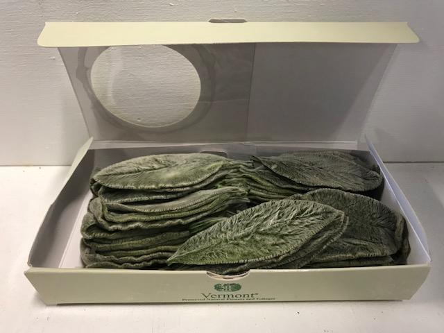 Stachys green 75pc