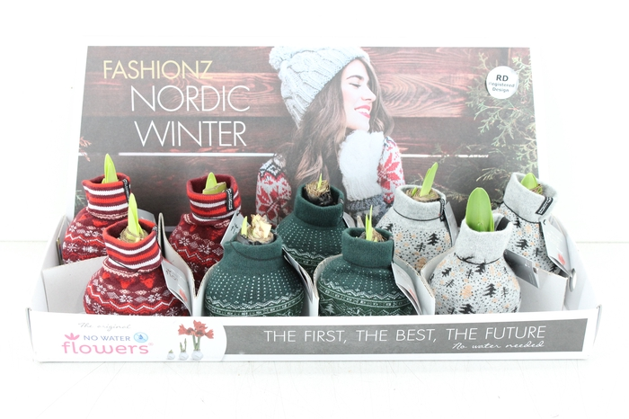 <h4>arr.. Amaryllis No Water - Fashionz Nordic winter</h4>