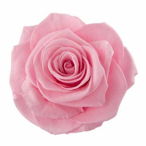Rose Ines Madeleine Pink