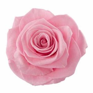 Rose Ava Madeleine Pink