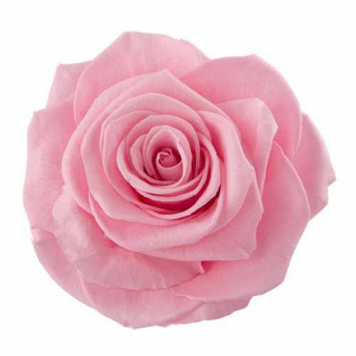 <h4>Rose Ines Madeleine Pink</h4>