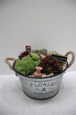 <h4>4207 Zink TEIL FLOWERS SEMP</h4>
