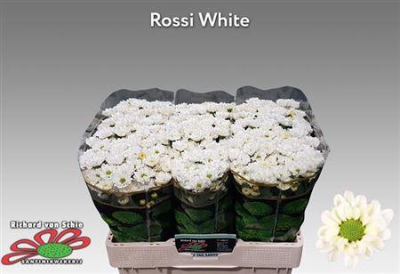 <h4>CHR SAN ROSSI WHITE ANGEBOT</h4>
