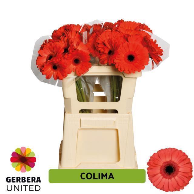 <h4>GE GR COLIMA</h4>
