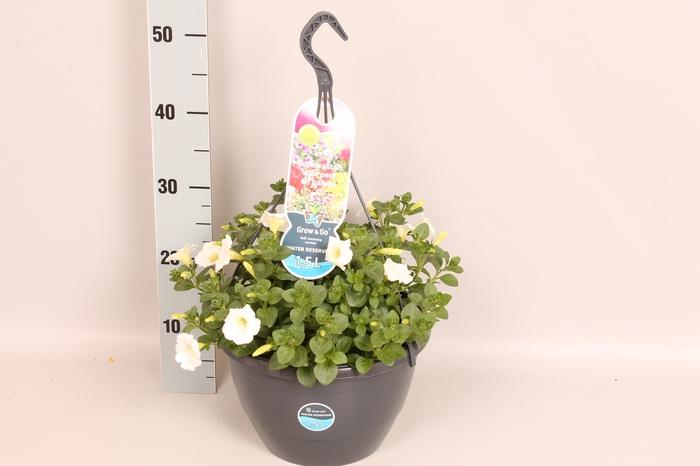 <h4>Hangpotten 27 waterreservoir Petunia White</h4>