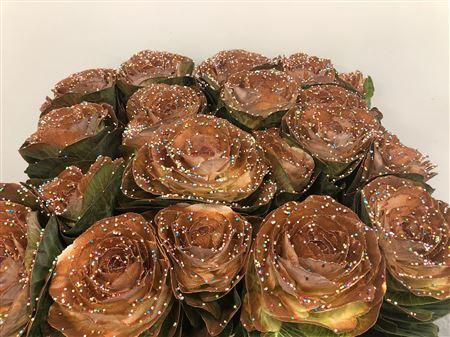 <h4>Brassica Candy Choco</h4>