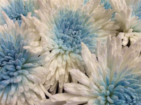 <h4>Chr G Marshmallow Light Blue</h4>