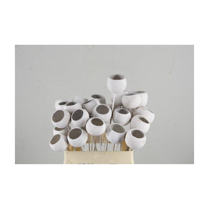 <h4>Stick Bell Cup White Washed</h4>