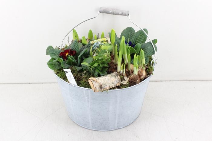 <h4>arr.. Primula PL - Zink bucket old grey</h4>