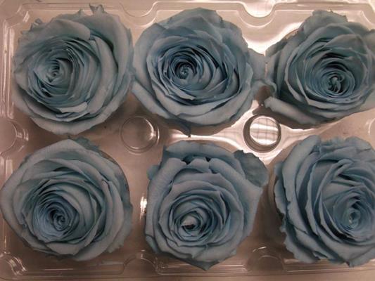<h4>R Prs Baby Blue</h4>