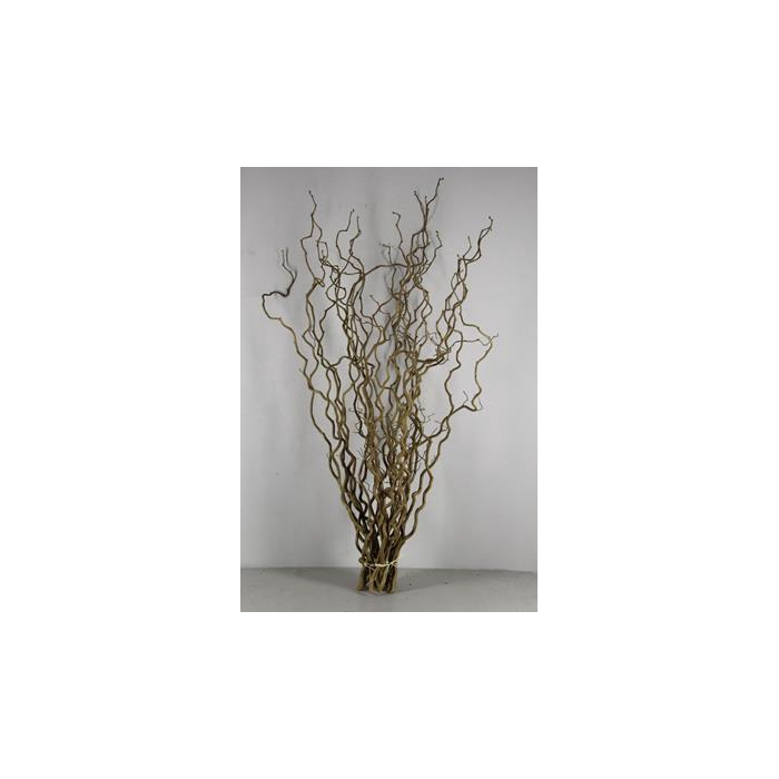<h4>Corylus(1 Jarig)</h4>