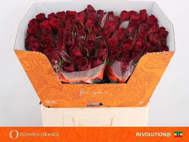<h4>R GR REVOLUTION@</h4>