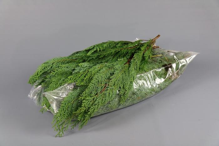 <h4>Coniferen Groen 5 kg.</h4>