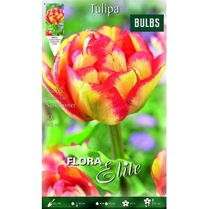 Z Tulipa Sundowne Double