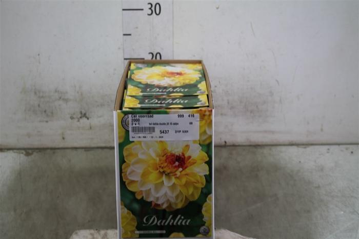 <h4>Bol Dahlia Double Jill 10 Zakjes X1</h4>
