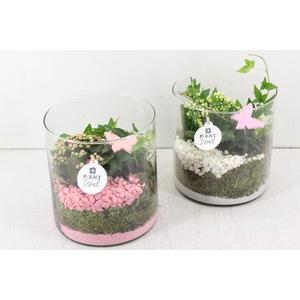 arr. PL - Glas cilinder - roze/wit