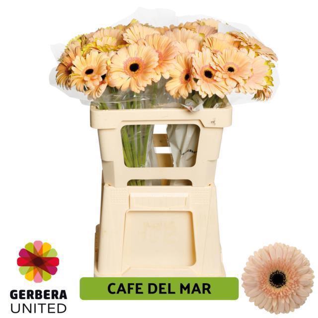 <h4>GE GR CAFE DEL MAR</h4>