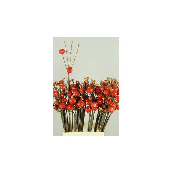 <h4>Stick Berries-pumpkins Orange</h4>