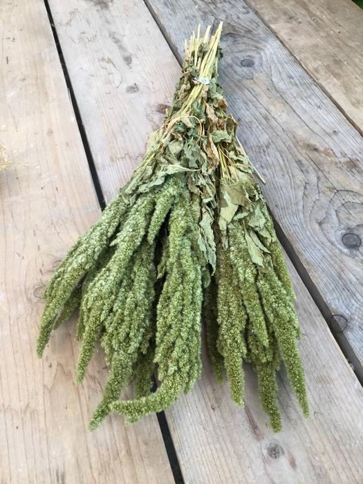 <h4>DRIED AMARANTHUS GREEN NATURAL PB</h4>
