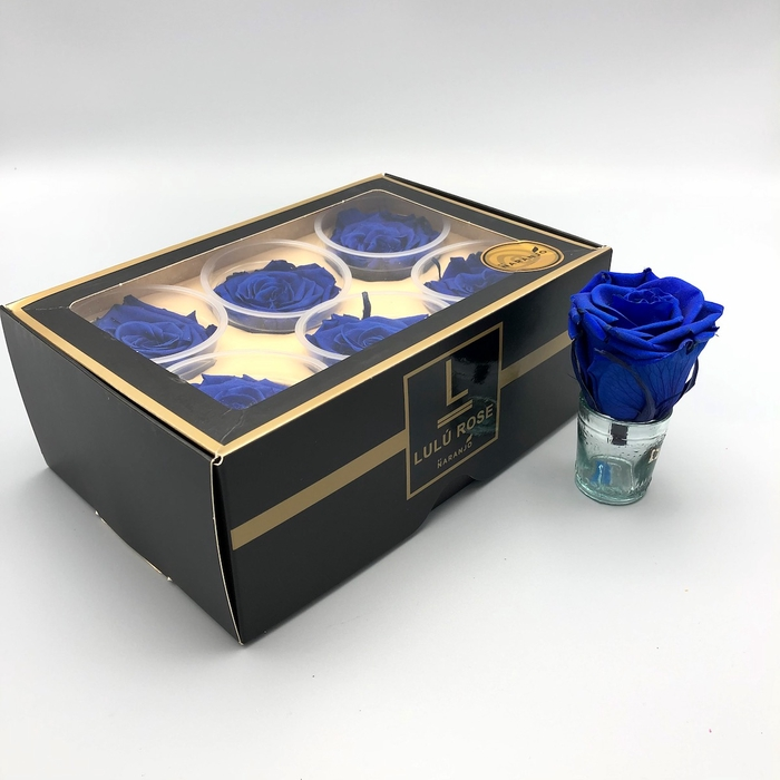 <h4>R PR Lulu (Large) Blue</h4>