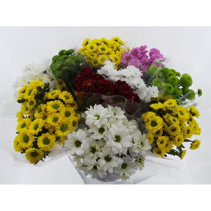 <h4>Bouquet Mono Santini x5 mix 50cm</h4>