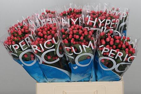 <h4>Hyp Coco Kimono</h4>