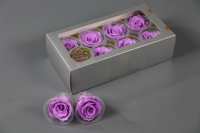 <h4>Rosa Preserved Baby Lily Rose</h4>