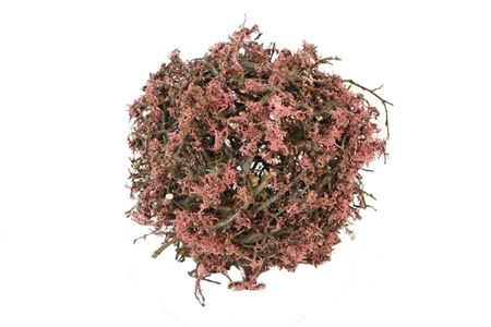 <h4>Ball Bonsai Mossed D25.0 Nat/pink</h4>