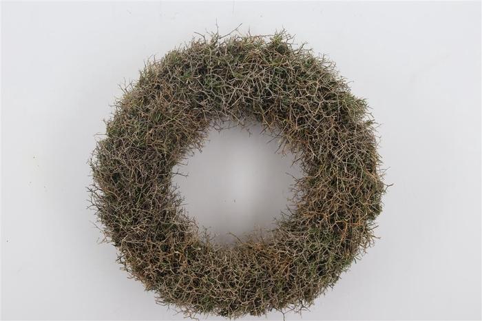 <h4>Wr Iron Bush Naturel 45cm</h4>