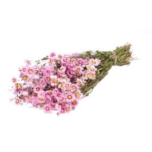 Rodanthe pink nat. Craft