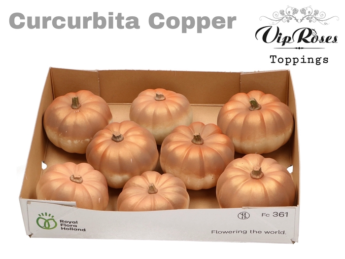 <h4>CURCUBITA COPPER</h4>