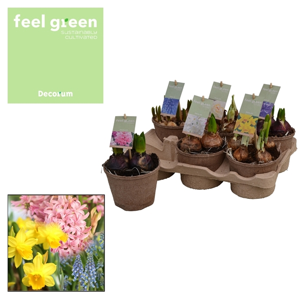 <h4>Bolbloemen Gemengd FEEL GREEN</h4>