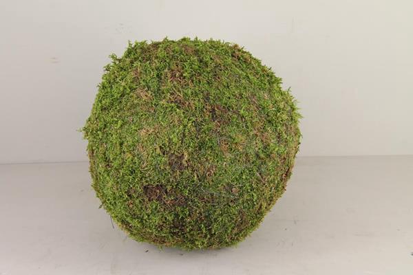 <h4>Ball Moss Green 40cm</h4>