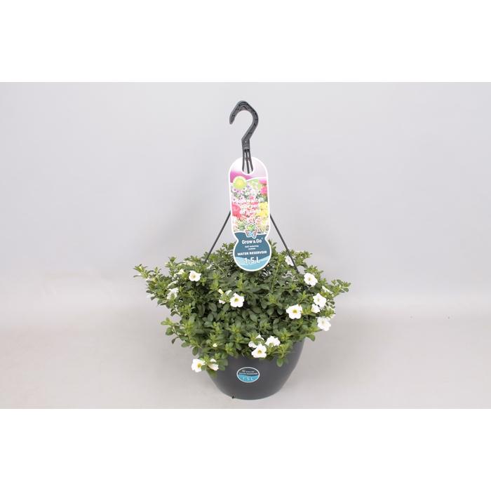 <h4>Hangpotten 27 waterreservoir Calibrachoa White</h4>