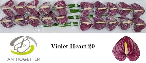 <h4>ANTH A VIOLET HEART 20.</h4>