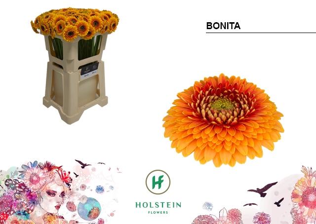 <h4>GE BV water Gerponi Bonita</h4>
