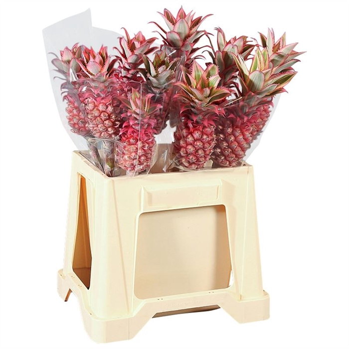 <h4>Ananas Mini</h4>