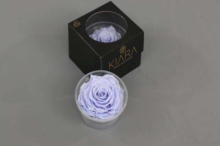 <h4>Rosa Preserved Cool Lavender Solitarie</h4>