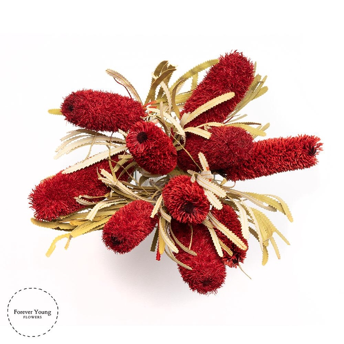 <h4>Dried Banksia Attenuata Red</h4>