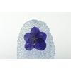 Kristal 1 Vanda Blauw