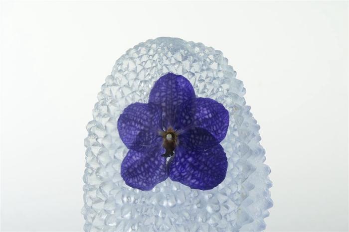 <h4>Kristal 1 Vanda Blauw</h4>