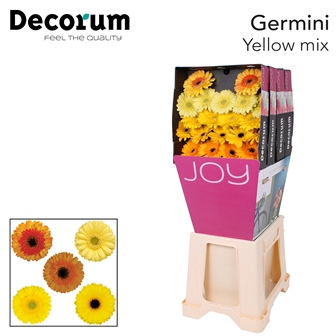 <h4>Ge Mi diamond mix Yellow</h4>