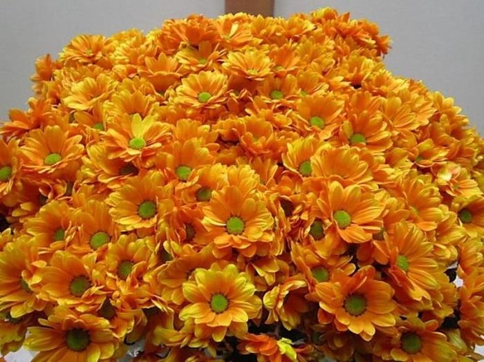 <h4>Chr T Bacardi Oranje</h4>