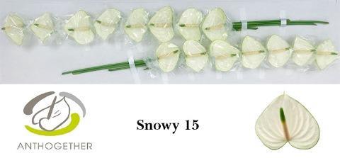 <h4>ANTH A SNOWY</h4>