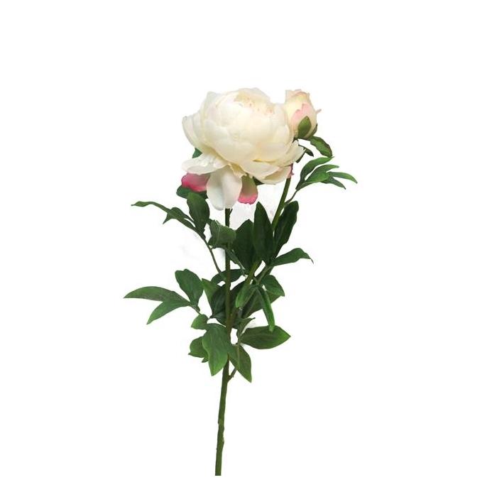 <h4>SILK FLOWERS - PEONY LARGE CREAM X2 93CM (HEAD 14CM, BUD 6CM)</h4>