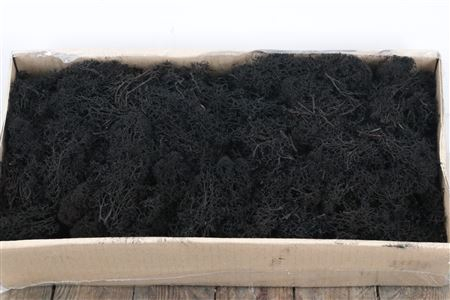 <h4>Reindeer Moss 500gr Black</h4>