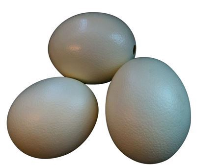 <h4>Basic Egg Ostrich Resin</h4>