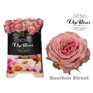 R GR BOURBON STREET x 20
